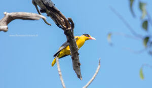 Birding Komodo