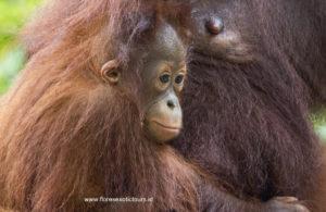 Borneo wildlife tours