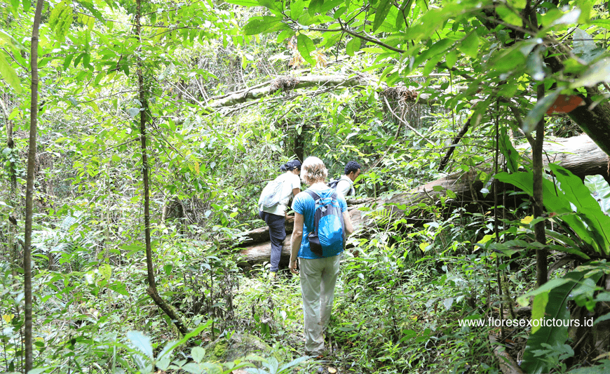 Flores Eco Tours and trekking