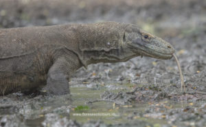 Komodo Adventure tours