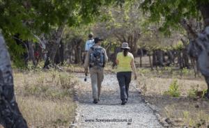 Komodo adventure tours