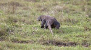 Komodo Tours - Komodo National Park