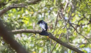 Komodo birds watching
