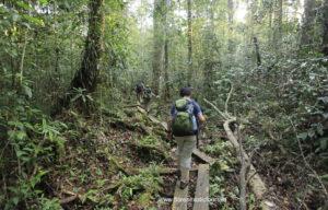 Orangutan adventure tour