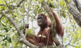 Orangutan adventure tours