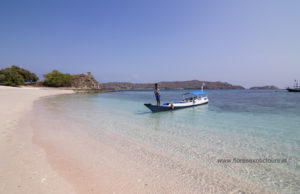 Pink beach,Komodo island