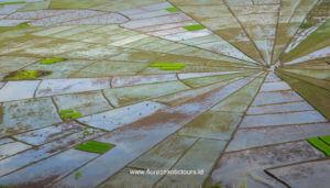 Spiderweb Rice fields