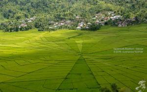 Spiderweb ricefield