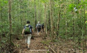 Trekking, Orangutans Borneo tour