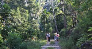 Wae Rebo - Trekking