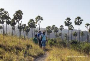 trekking,rinca island