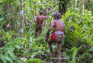 Siberut island