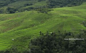 Ruteng,Rice field terrace