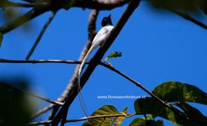 Birding and bird Photography