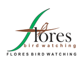 Flores Bird Watching